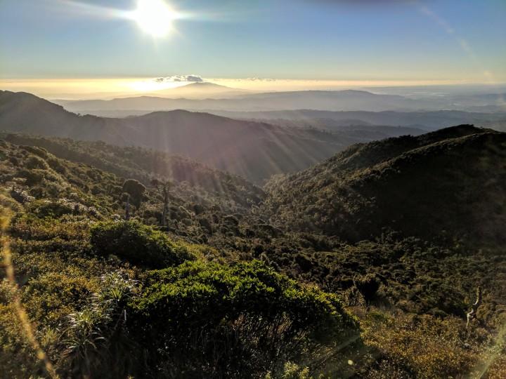 Pirongia-summit1