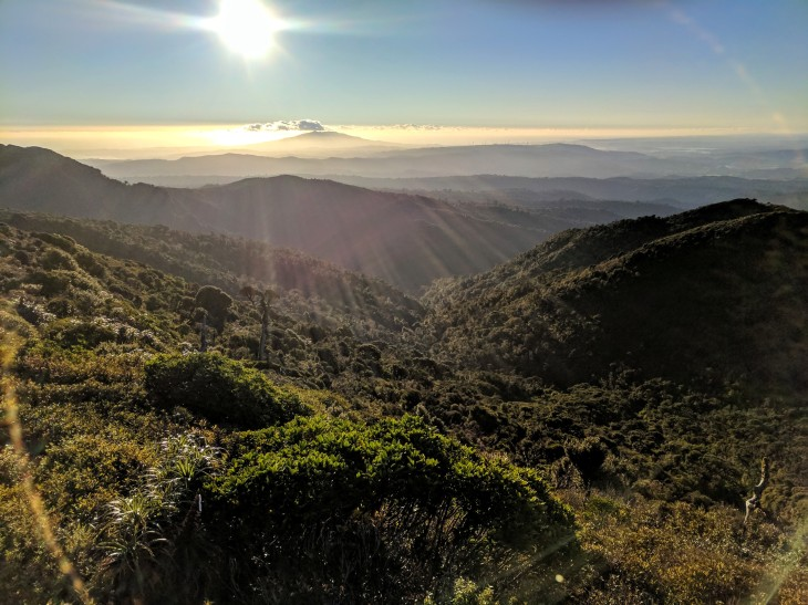 Pirongia-summit1